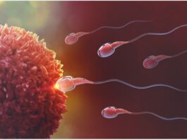 Men's Fertility Naturally With Food - Fit Hut: Fitness | Health